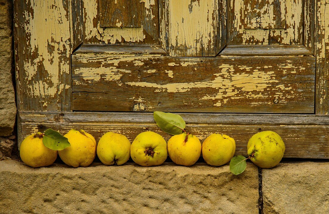 A row of quinces in front of a weathered wooden door