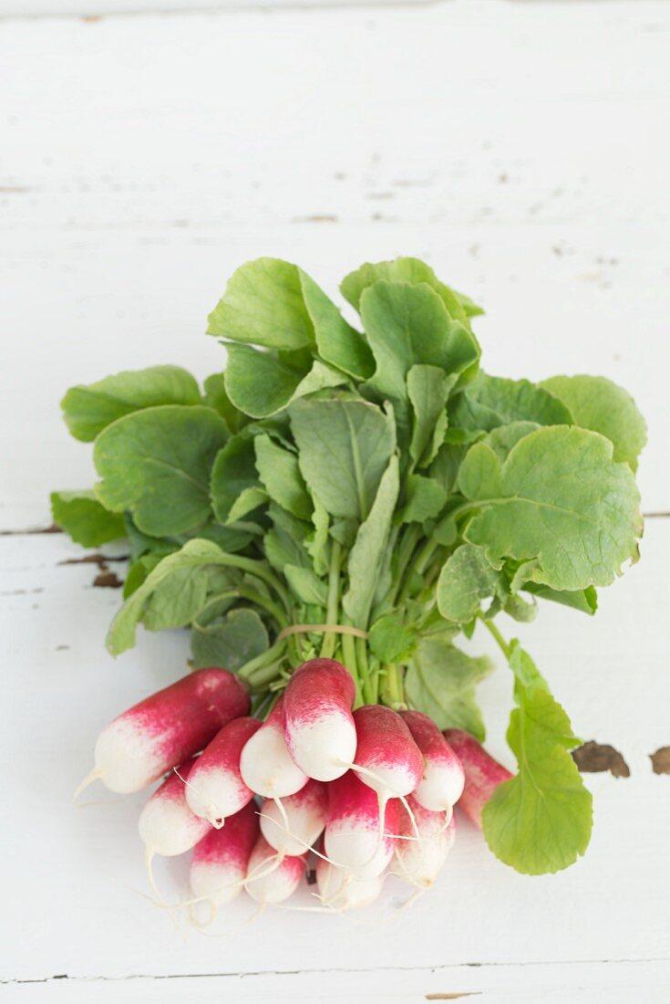 Bundle of radishes