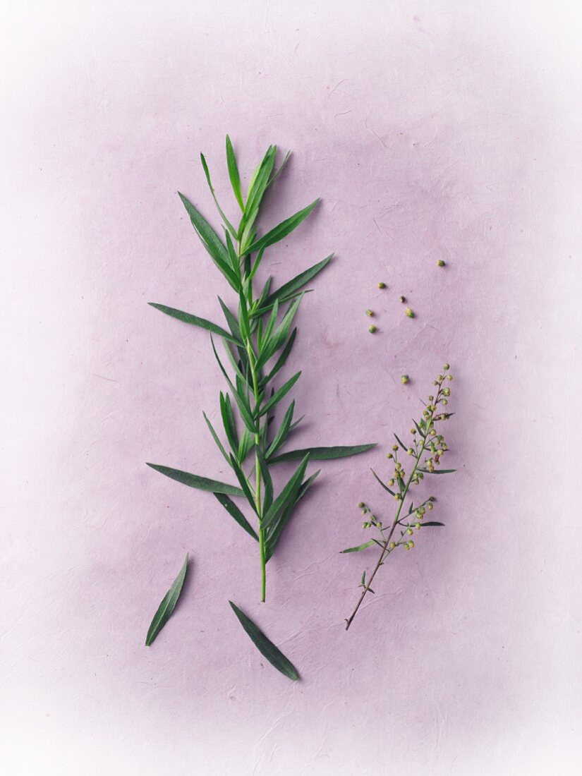 Fresh tarragon with flowers