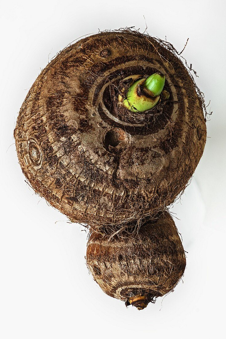 A taro root on a white surface