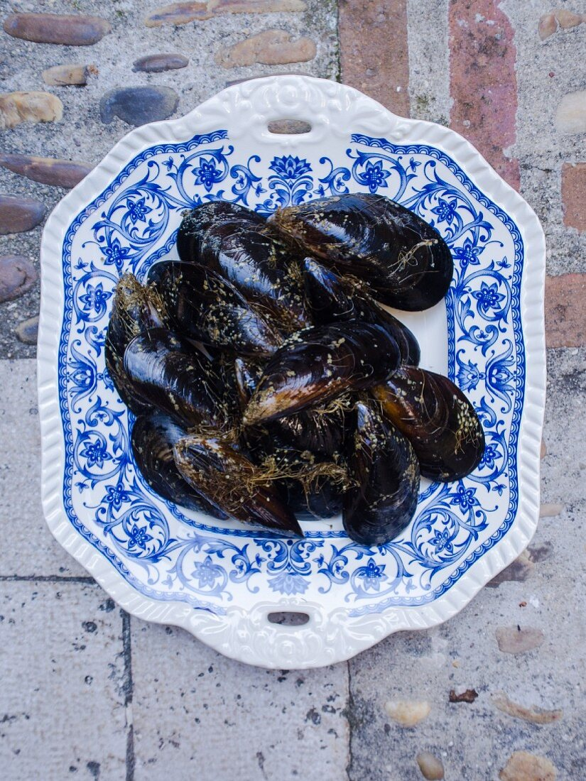 Mussels on a porcelain plate
