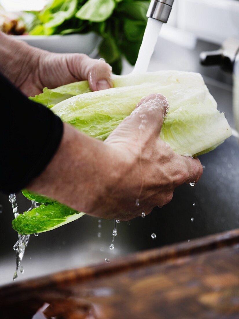 A man washing cos lettuce under running water in a kitchen sink