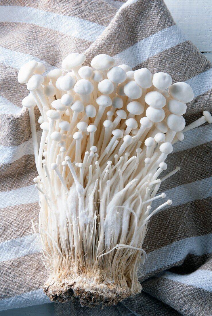 Fresh enoki mushrooms on a striped cloth