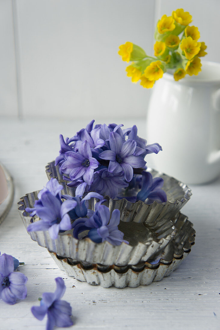 Hyacinth flowers in tart cases in front of cowslips in milk jug