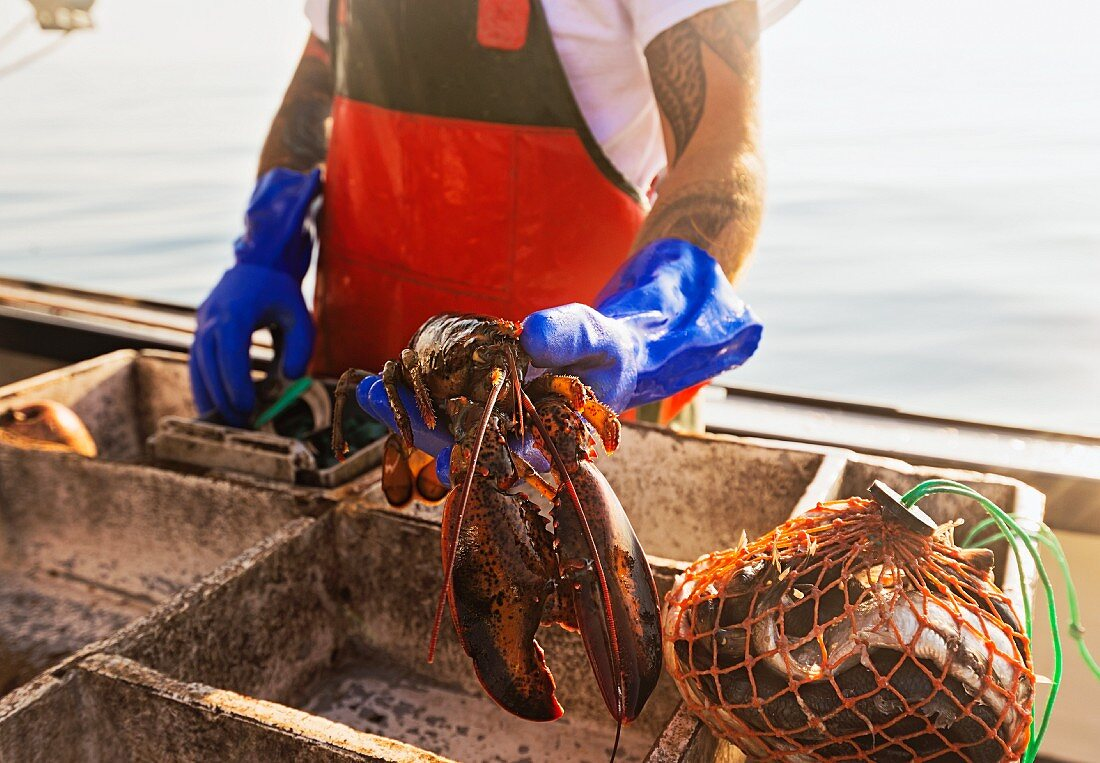 A fisherman holding a freshly caught lobster