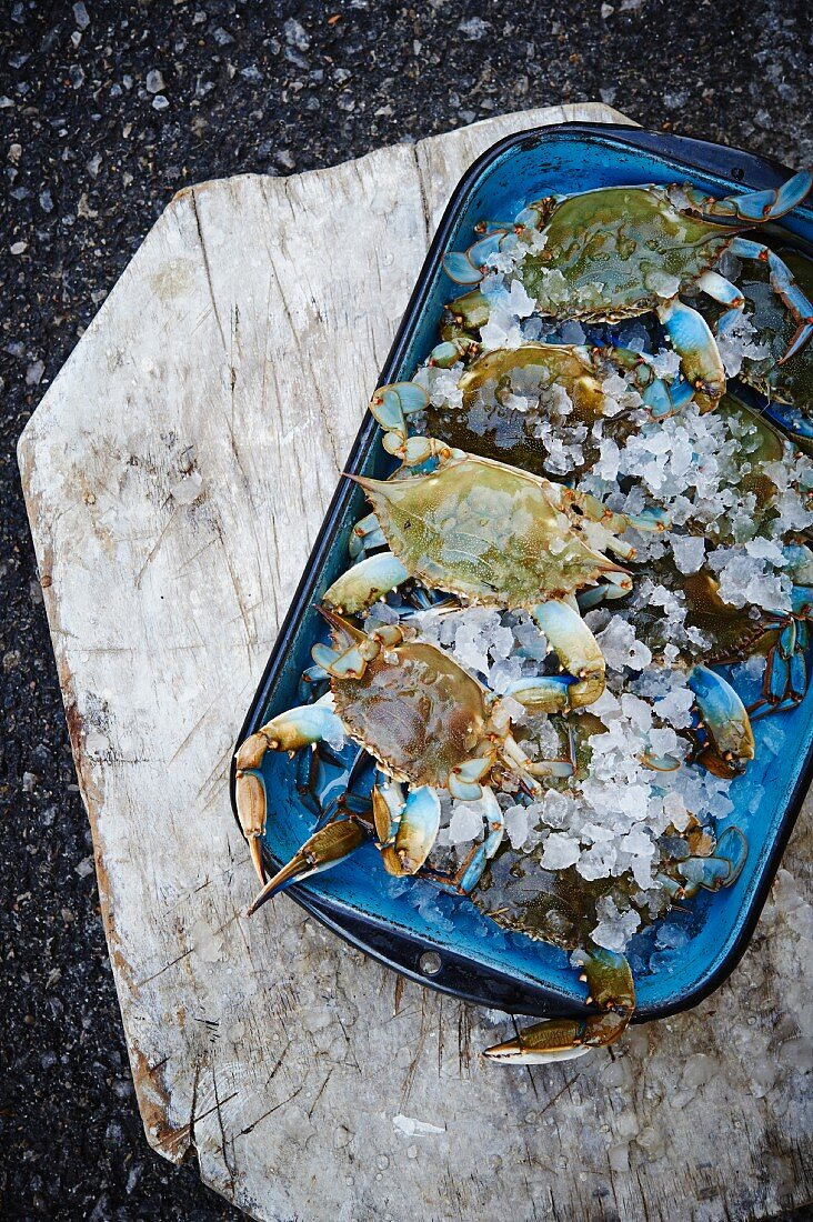Fresh Maryland blue crabs in a dish on ice (seen from above)
