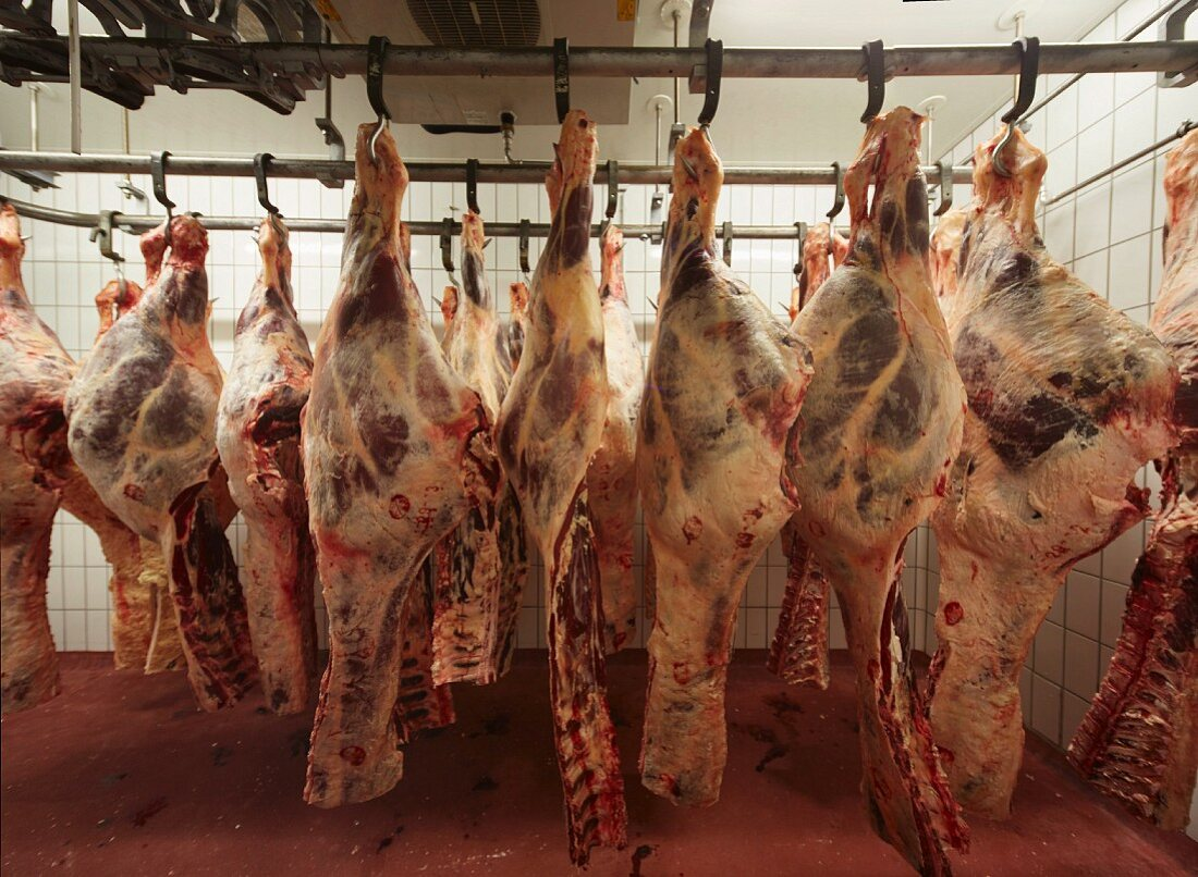 Meat carcasses hanging in a slaughterhouse on meat hooks