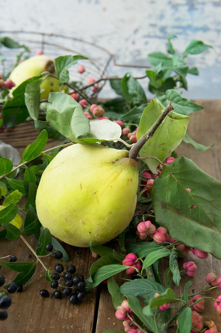 Quince with spindle