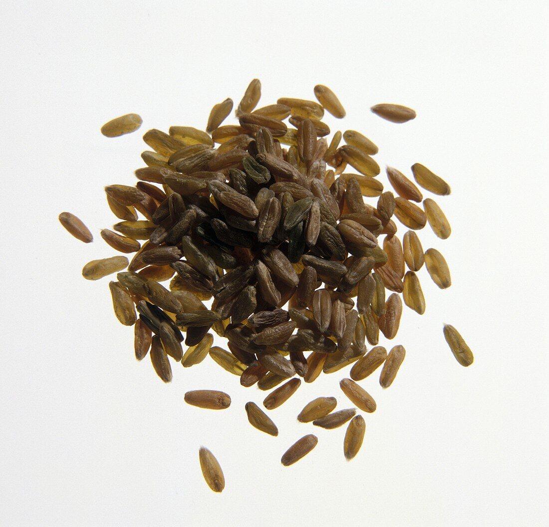 Pile of Unripe Spelt Grains