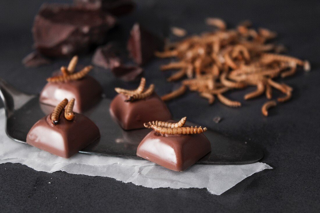 Nougat pralines with caramelised meal worms
