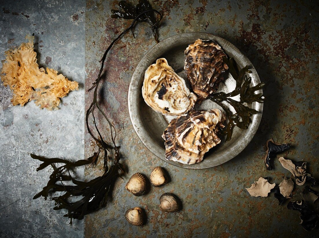An arrangement of oysters, seaweed and mussels