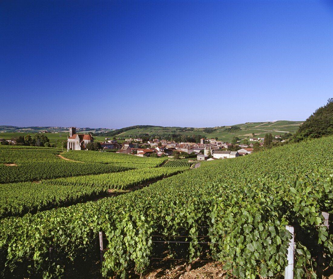 Der Weinort Fuisse, Teil der Spitzenappellation des Maconnais