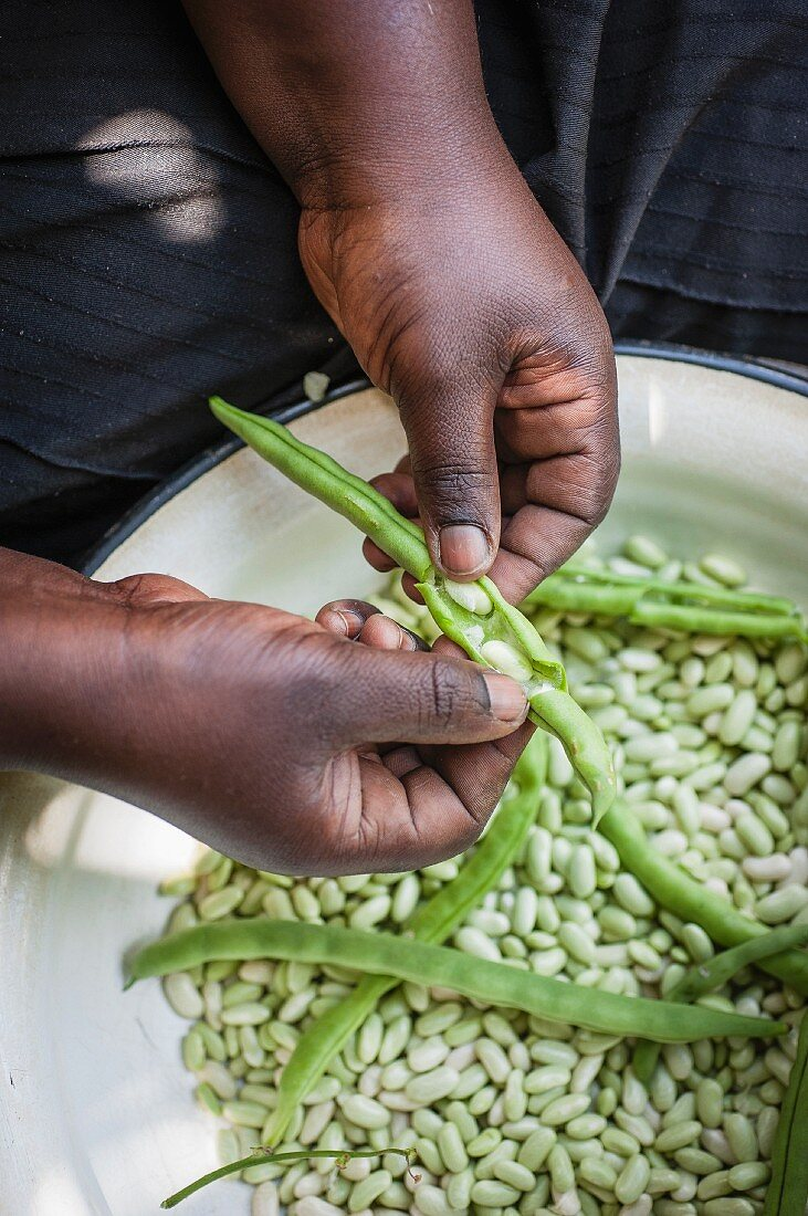 Shelling beans from green pods