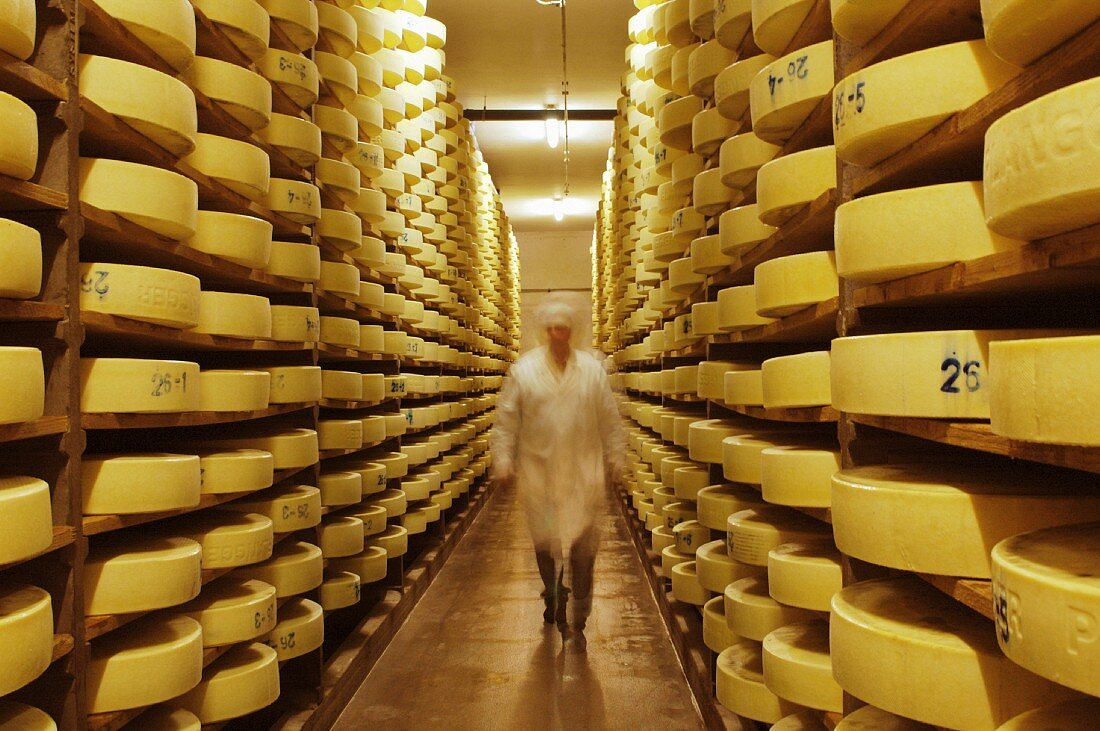 Alpine cheese in a storage room at a dairy in Walchsee, Tyrol, Austria