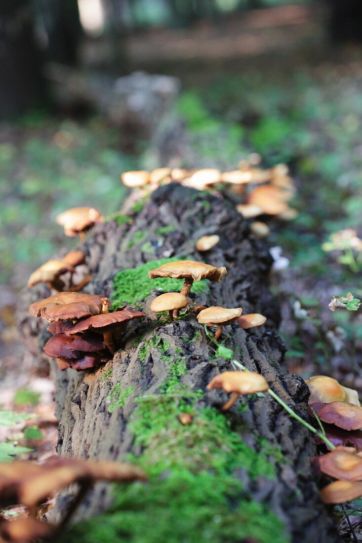 Mushrooms growing on a tree trunk in a forest
