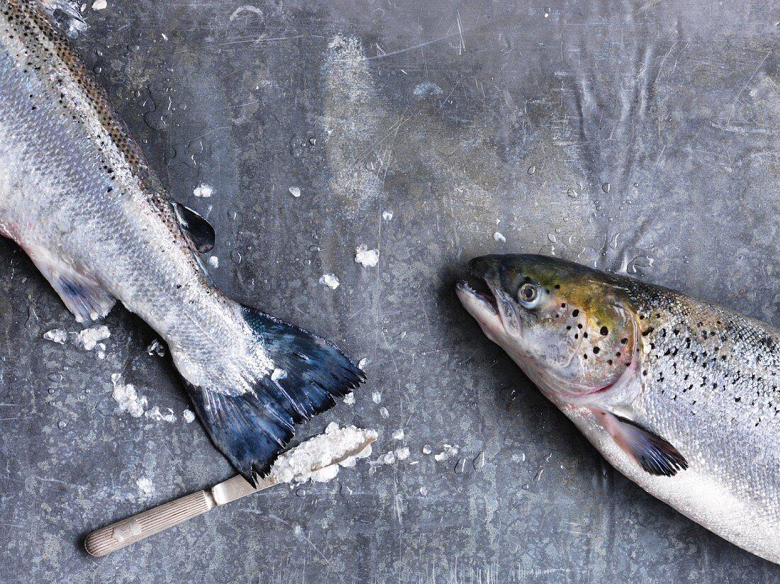Two fresh salmon