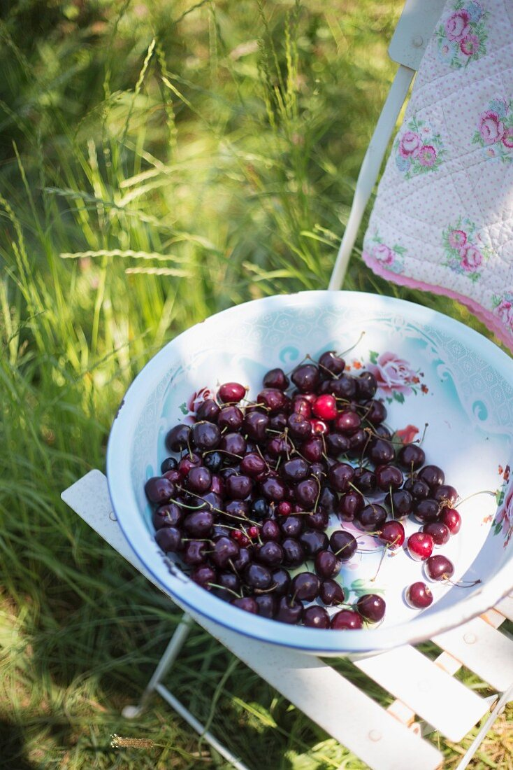 Fresh cherries in an enamel bowl on a chair in a field