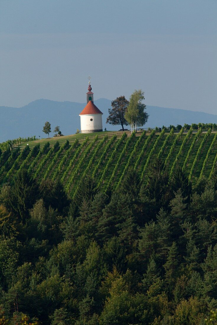 A vineyard with a small chapel, Styria