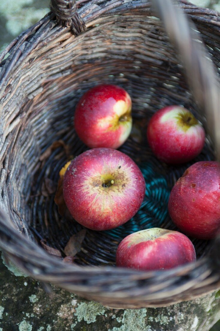 Apples in a woven basket