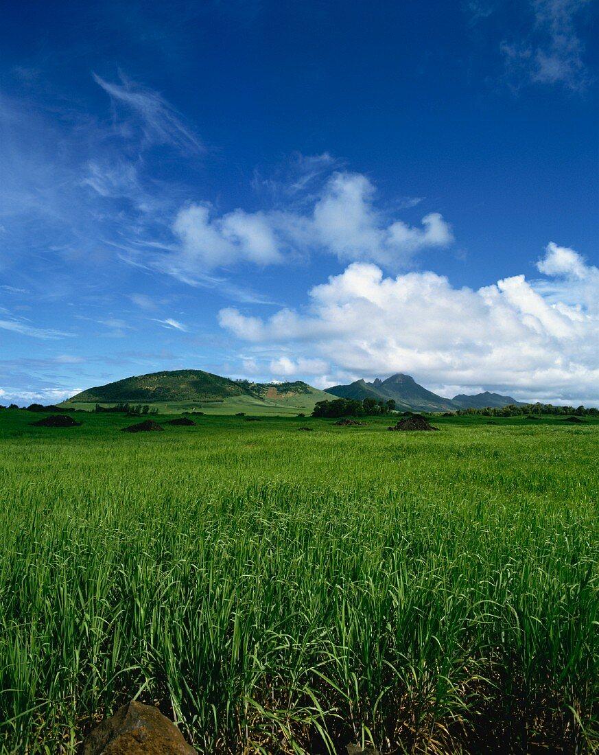 A wide landscape of sugar cane fields, Mauritius, Africa