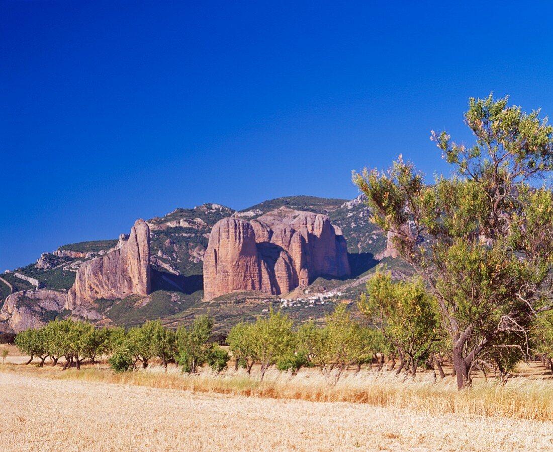 Mandelplantage vor imposanten Felsformationen; Mallos de Riglos, Aragonien, Spanien