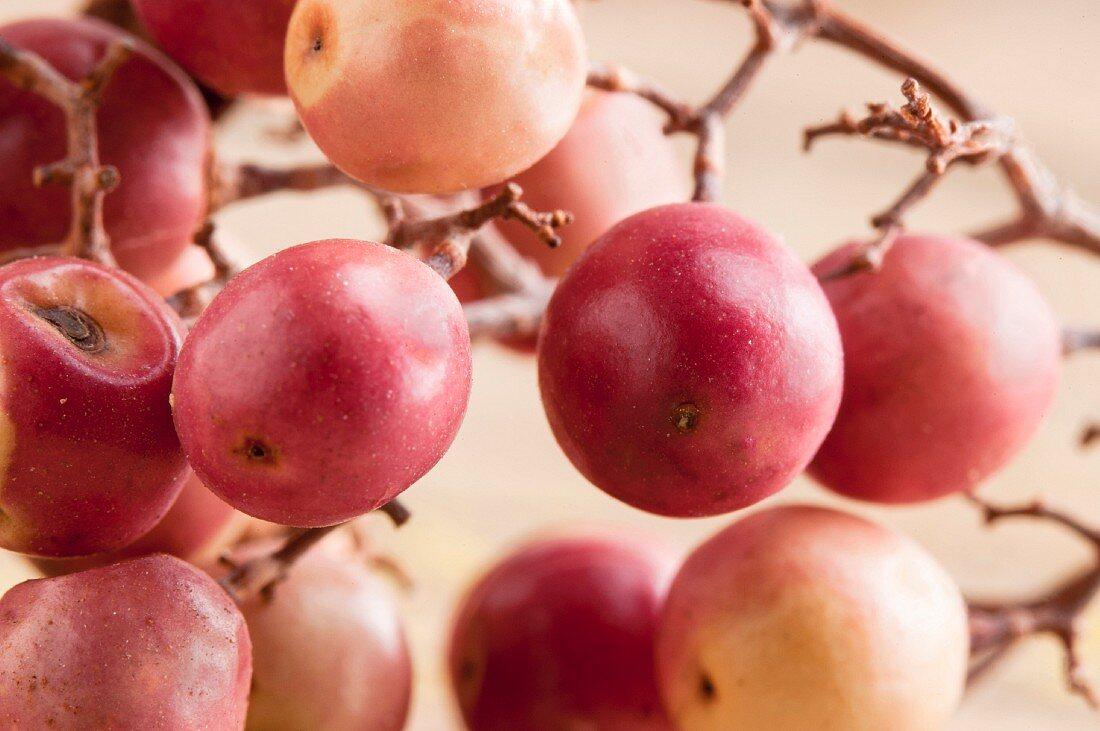 Fresh pink pepper berries on a vine