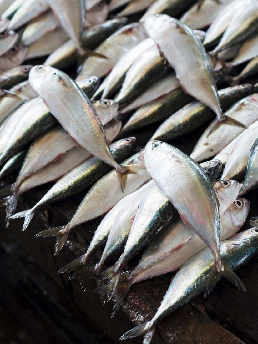 Fresh mackerel at a fish market in Dar es Salaam, Tanzania