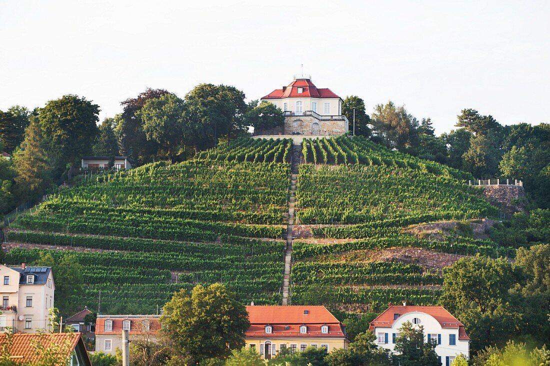 Martin Schwarz and Grit Geissler's vineyard Schloss Friedstein in Radebeul