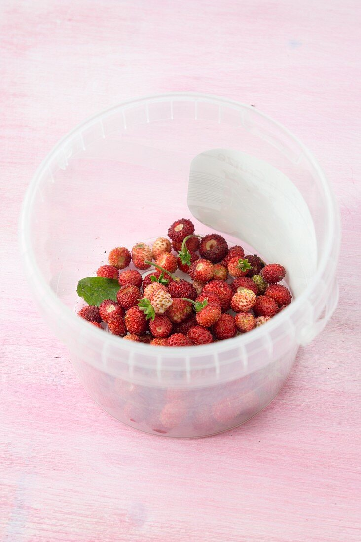Wild strawberries in a plastic bucket