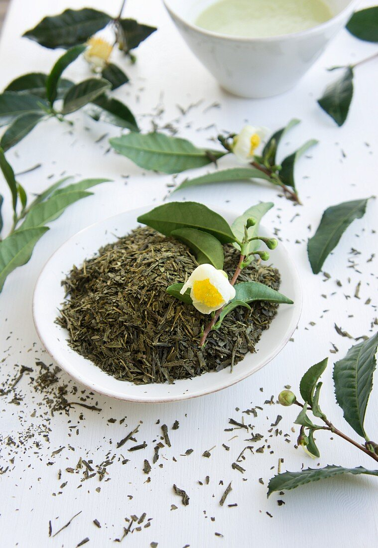Dried tea leaves and a flowering sprig of tea leaves