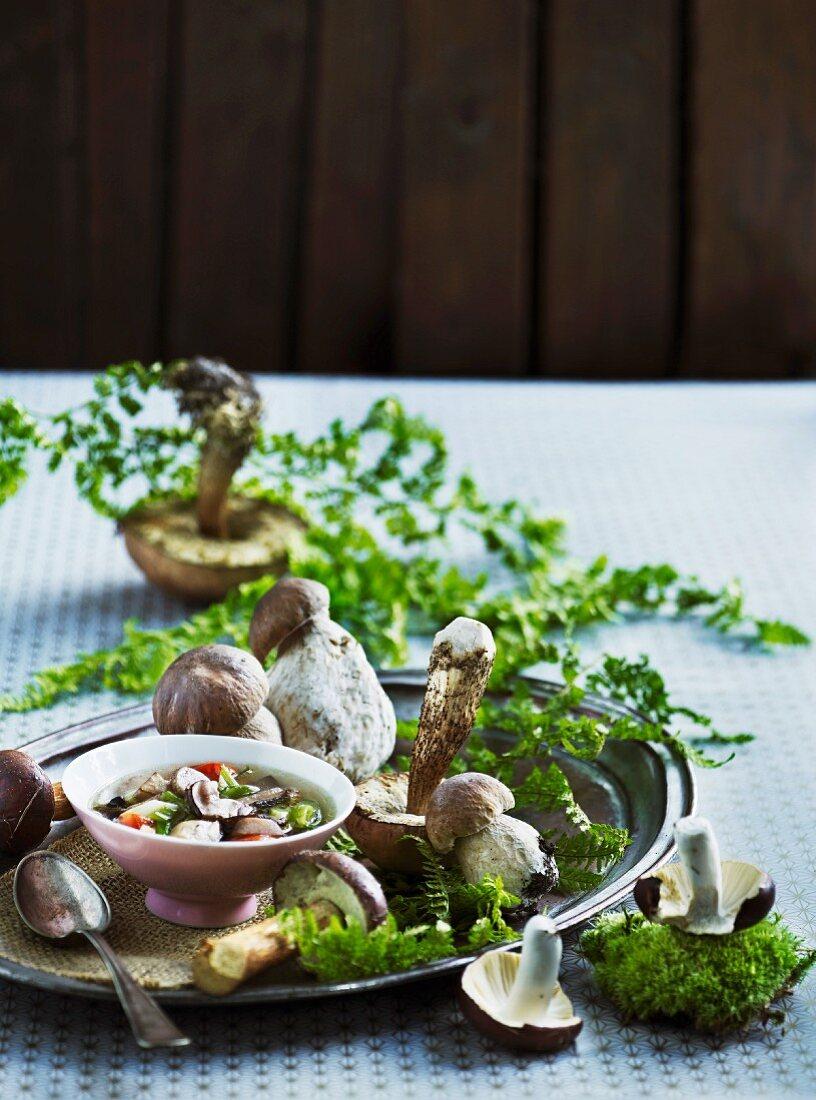 Porcini mushroom soup and fresh porcini mushrooms