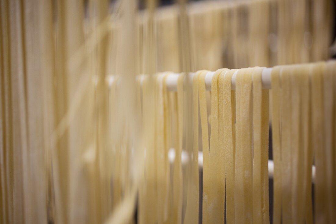 Homemade fettuccine drying on a rack