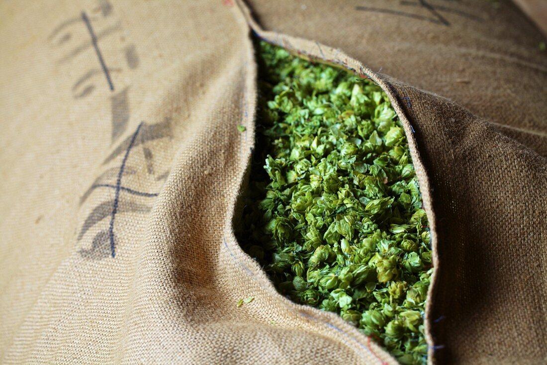 Beer hops in a jute sack
