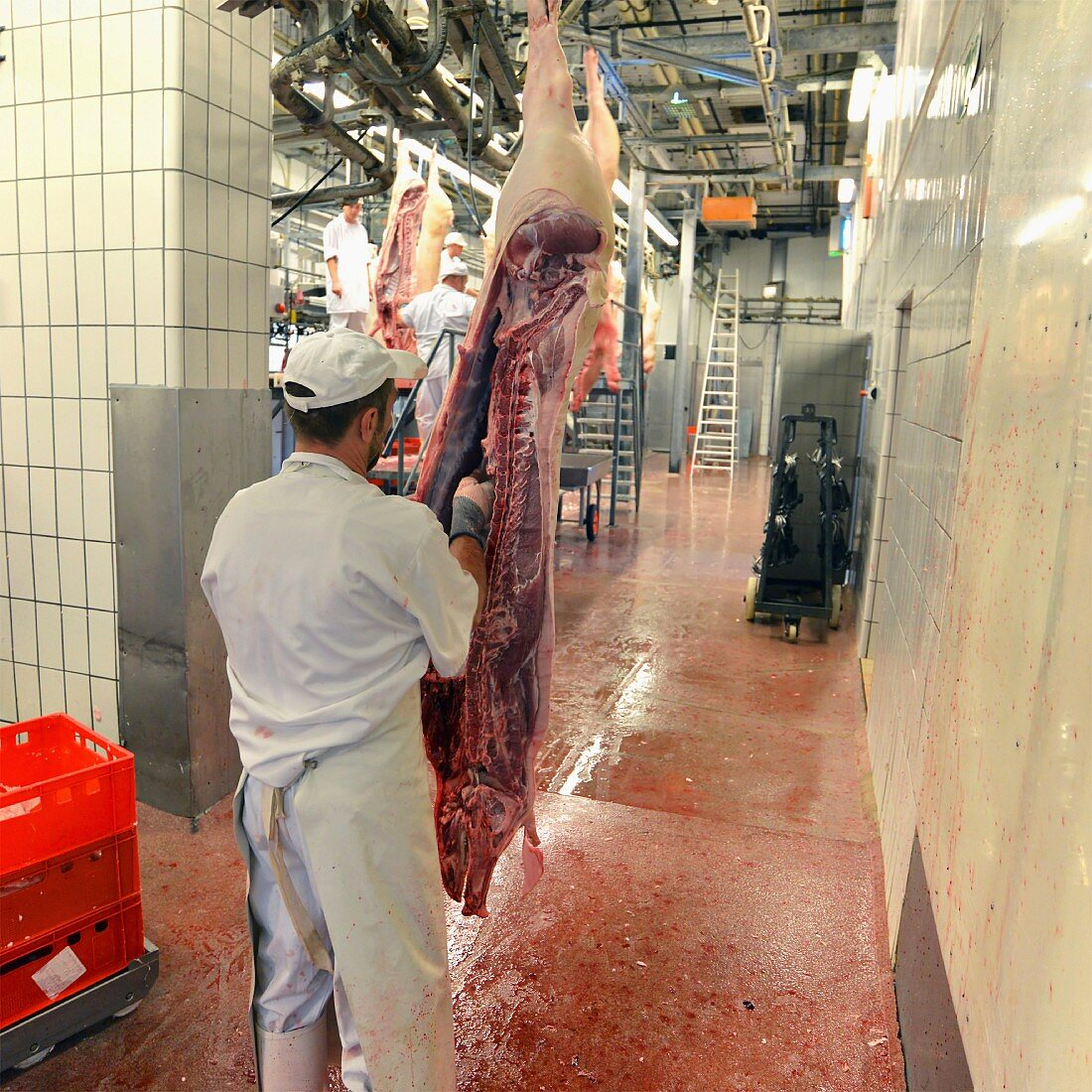 A pig carcass being jointed in a slaughterhouse, Germany