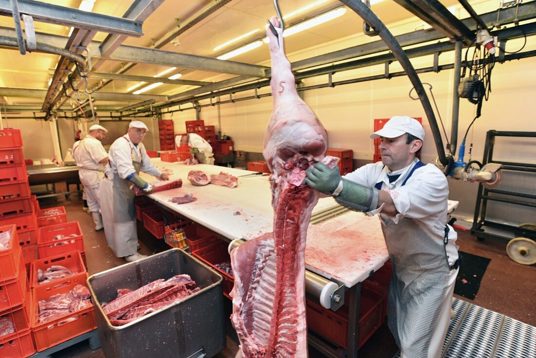 Butchers cutting up pig carcasses in a slaughterhouse, Germany