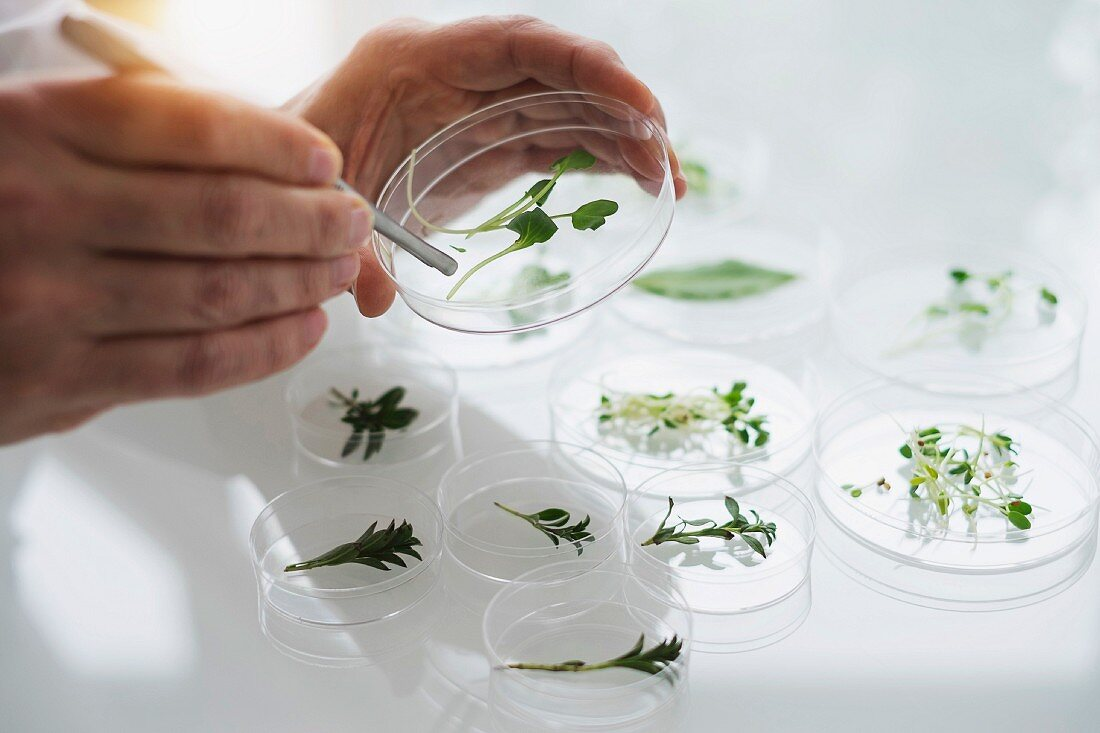A man holding a plant in a petri dish in a laboratory