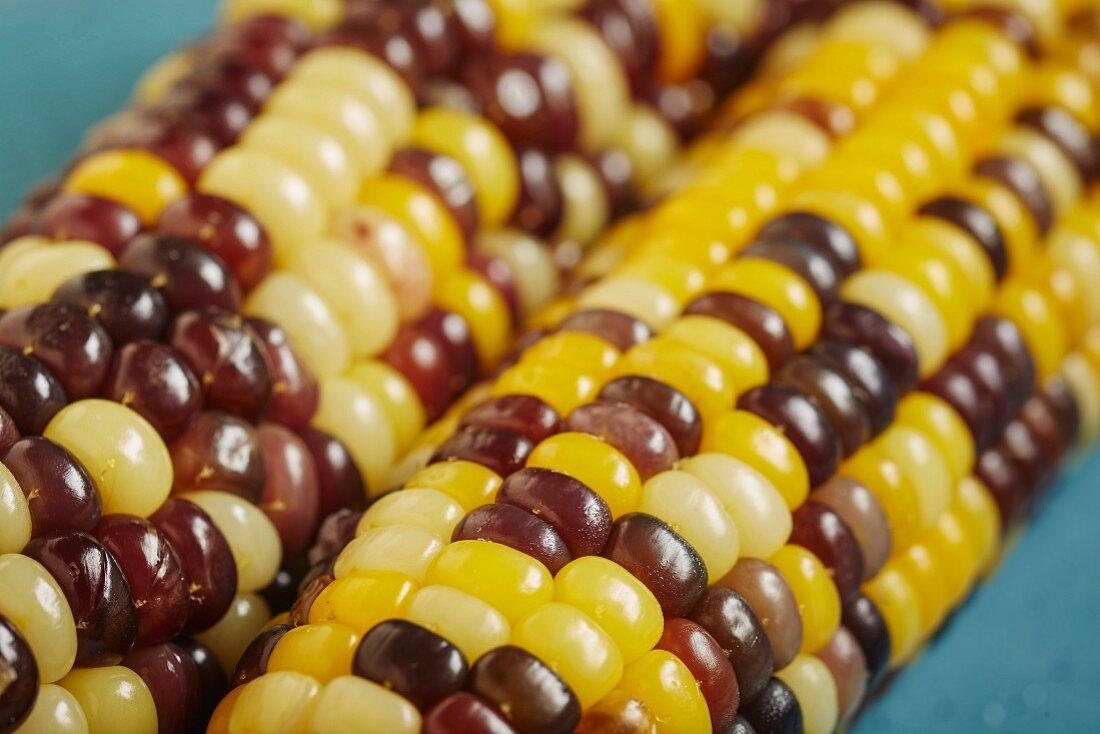 Coloured, cooked corn cobs (Korea)
