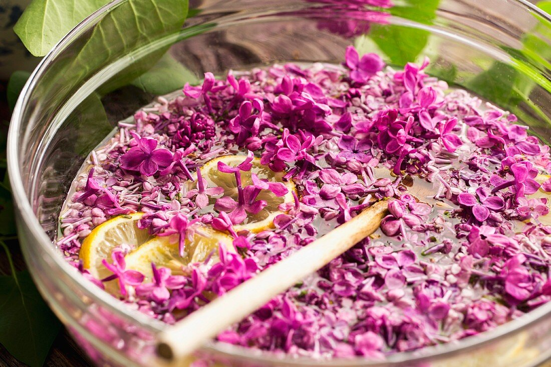 Lilac syrup being made: flowers steeping in water with lemon slices