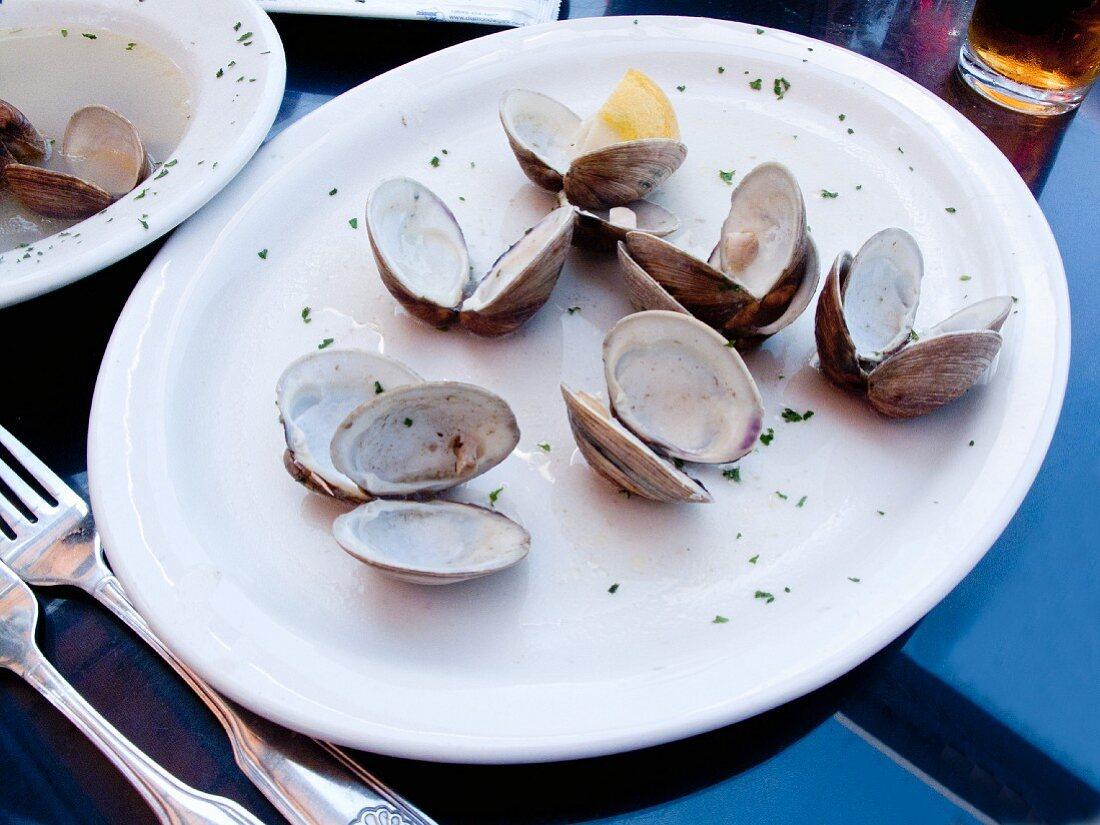 Empty clam shells