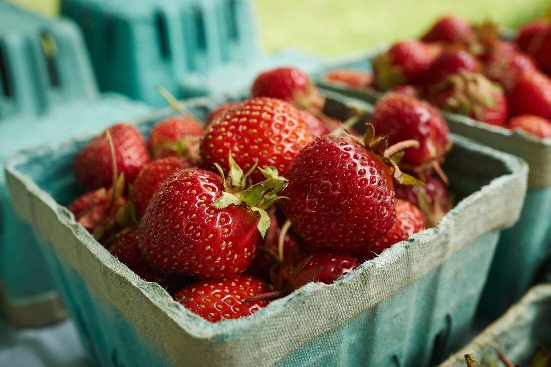Fresh strawberries in cardboard punnets