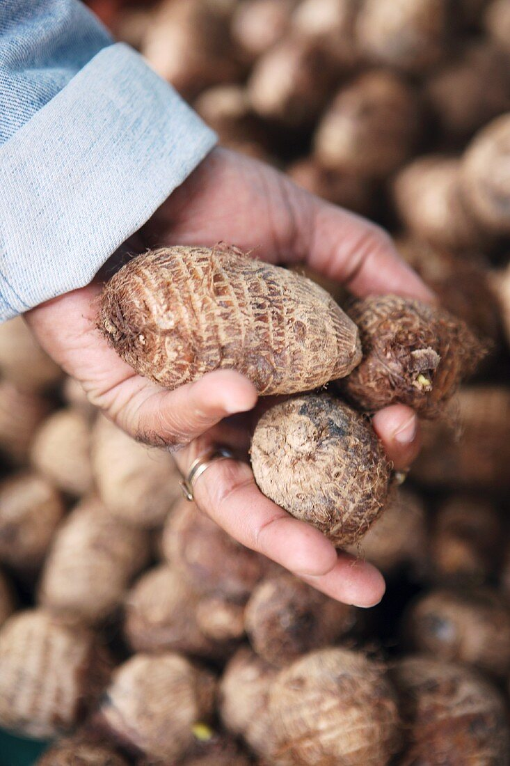 A person holding taro roots