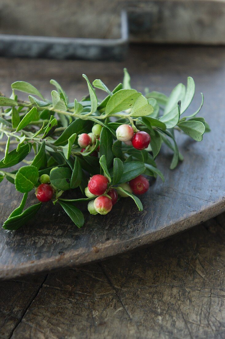 A sprig of lingonberries