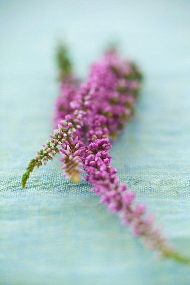 Purple flowers on a pastel-blue linen tablecloth