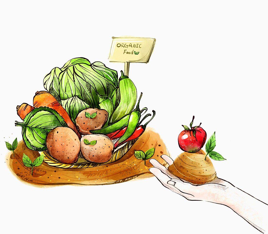 An illustration of organic vegetables