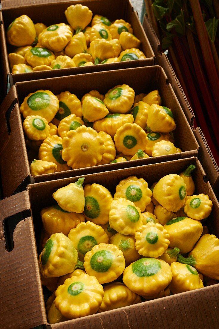 Yellow patty pan squash in cardboard cartons
