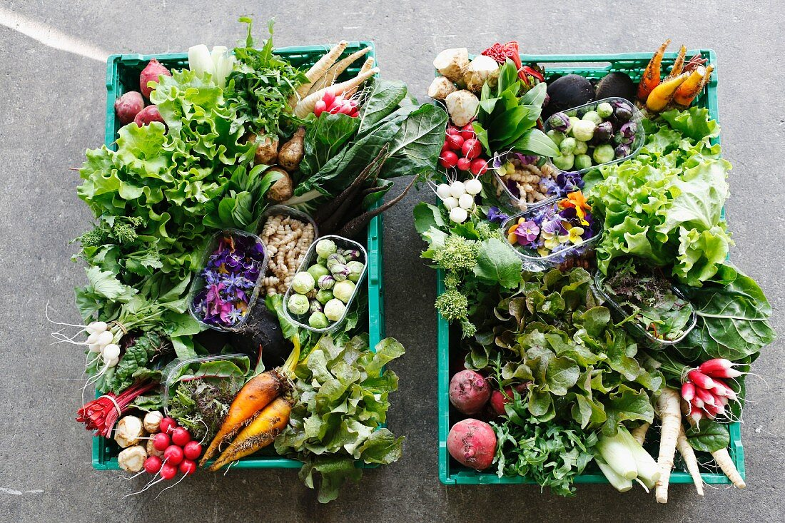 Two vegetable crates with organic vegetables and lettuce (seen from above)