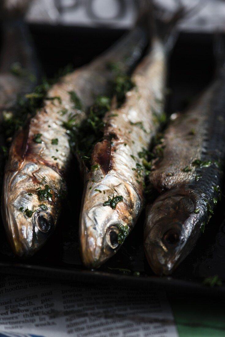 Sardines with fresh herbs