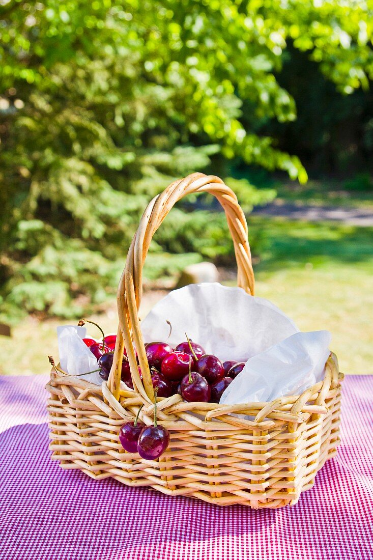 Korb mit Kirschen auf rot-weiss karierter Picknickdecke, umgeben von Bäumen