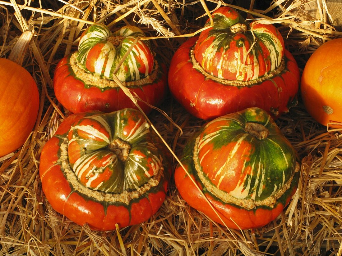 Turban squash in straw