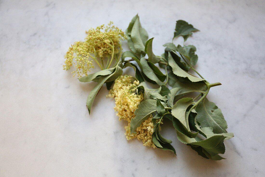 Sprigs of wilted elderflowers and leaves